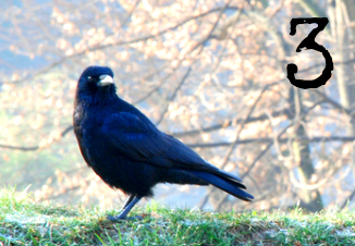Card 3 - Crow - Which bird has a message for you