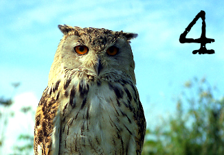 Card 4 - Owl - Which bird has a message for you