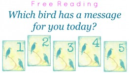 Free Reading: Which bird has a message for you?