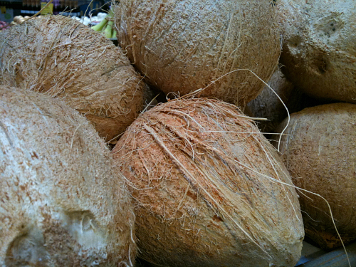 Coconuts at Whole Foods