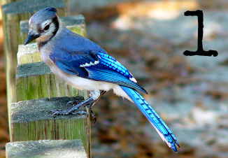Card 1 - Blue Jay - Which bird has a message for you