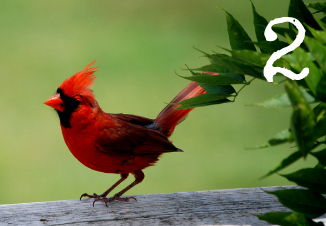 Card 2 - Cardinal - Which bird has a message for you