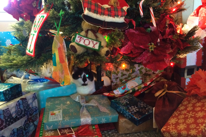 Cosmo at Christmas