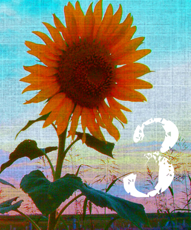 Free Reading - How Soon Will It Happen - Card 3 - by Melanie The Medium