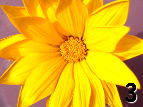 Yellow flower - Free Reading Pick a flower by Melanie the Medium